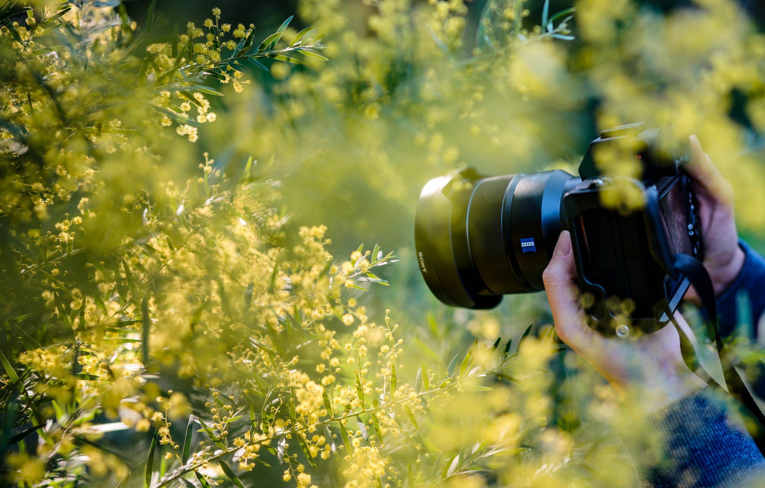Fotorekking